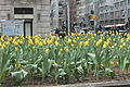 Spring flowers on Park Avenue, New York City IMG 8626.JPG