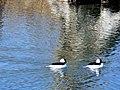 Spring time birds (420832483).jpg