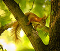Squirrelly squirrel (18013481404).jpg