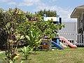 Starr-090721-3261-Psidium guajava-green fruit form-Wailuku-Maui (24877155401).jpg