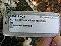 Starr-091104-0849-Atuna racemosa subsp racemosa-plant tag-Kahanu Gardens NTBG Kaeleku Hana-Maui (24894404471).jpg