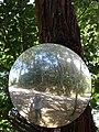 Starr 070306-5206 Eucalyptus robusta.jpg