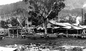 Scenic Rim Region - Timber yards at Canungra, 1939