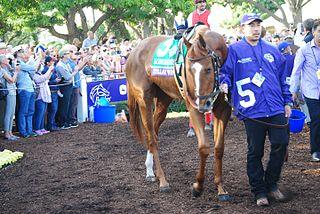 Stellar Wind (horse) American Thoroughbred racehorse