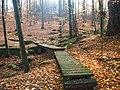Stezka v lese.jpg