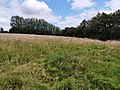 Stokes Field Hill.jpg