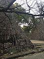 Stone Walls of Kumamoto Castle 20140222-3.jpg