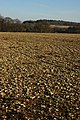 Stoney Cotswold field - geograph.org.uk - 1117703.jpg