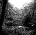 Strid Woods, Wharfedale, Yorkshire - geograph.org.uk - 648348.jpg