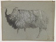 Study of a Ewe by Albert Bierstadt.jpg