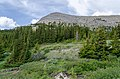 Subalpine zone on the Wilcox Pass.jpg