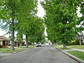 Suburban neighborhood, Van Nuys, CA.JPG