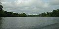 Suriname rivier en het oerwoud bij Aurora.JPG