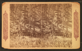 Surveying party on French creek, by Continent Stereoscopic Company.png