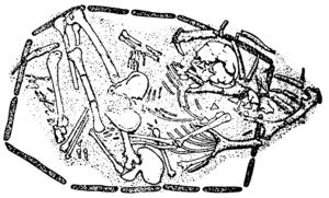 Maglemosian culture - Téviec burial