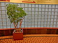 TW 台北 Taipei 兄弟大飯店 Brother Hotel lift lobby glass tile wall n tree planter Feb-2013.JPG
