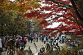Takao-san-Top 2010.11.13 saturday.JPG