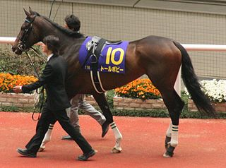 Tall Poppy (horse) Japanese Thoroughbred racehorse