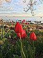 Tallinn (34176102744).jpg