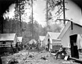 Tent camp, Palmer-Rupp Logging Company, Columbia County, ca 1917 (KINSEY 2497).jpeg