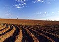 Terreno arado para plantação REFON 1.JPG