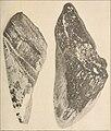 The American journal of science (1922) (18127570706).jpg