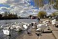 The Embankment, Peterborough - geograph.org.uk - 774066.jpg