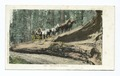 The Fallen Monarch, Big Trees, California (NYPL b12647398-66373).tiff