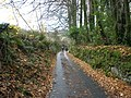 The road to Widecombe - geograph.org.uk - 1047236.jpg