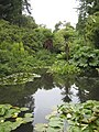 The second pond in the Jungle at Heligan - geograph.org.uk - 1401006.jpg