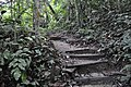 The uphill trail goes on (11967825876).jpg