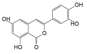 Thunberginol B - Image: Thunberginol B