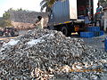 Tonnes of Sardines for oil extraction..JPG