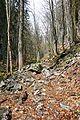 Trail to Black Lake 3.jpg
