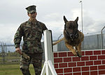 Training a dog DVIDS149270.jpg
