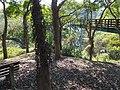 Tree Top Walk 樹梢步道 - panoramio (1).jpg