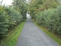 Tree lined lane - geograph.org.uk - 239773.jpg