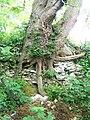 Tree trunk, Elsted - geograph.org.uk - 1340422.jpg