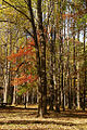 Trees at Ridley Creek State Park.jpg