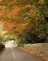Trees in Alkerton - geograph.org.uk - 1566951.jpg