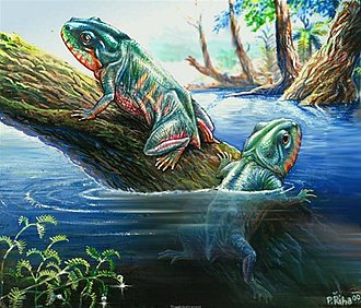 Amphibian - Triadobatrachus massinoti, a proto-frog from the Early Triassic of Madagascar