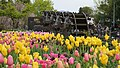 Tulips and waterwheel, Tonami Tulip Park.jpg
