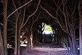 Tunnel Of Trees looking back (47282124001).jpg