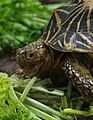 Turtle (03).jpg