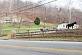 Twilight Borough, Pennsylvania horses.jpg