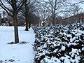 UIUC Snowstorm 3.jpg