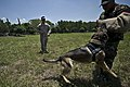 US and Philippine K-9 forces train together during Balikatan 2012 120419-F-MQ656-075.jpg