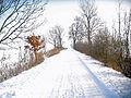 Uetersen Waldweg Langes Tannen 01.jpg