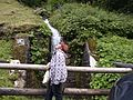 Un ruscello - panoramio.jpg