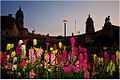 Union Buildings and flowers.jpg